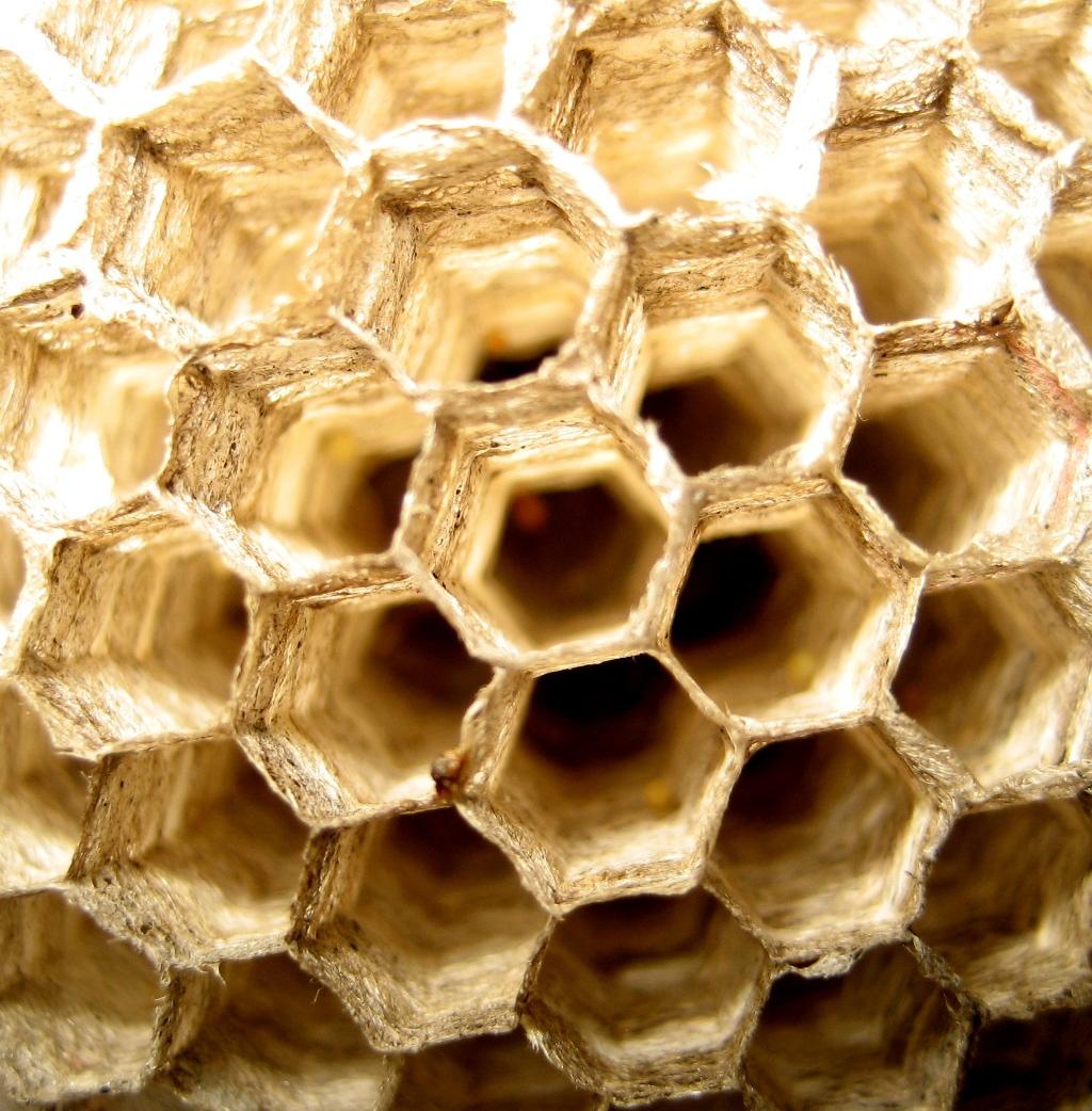 Panal avispas hexagonos ceramicos