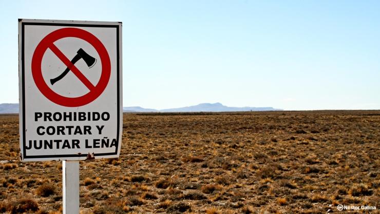 Prohibido cortar leña