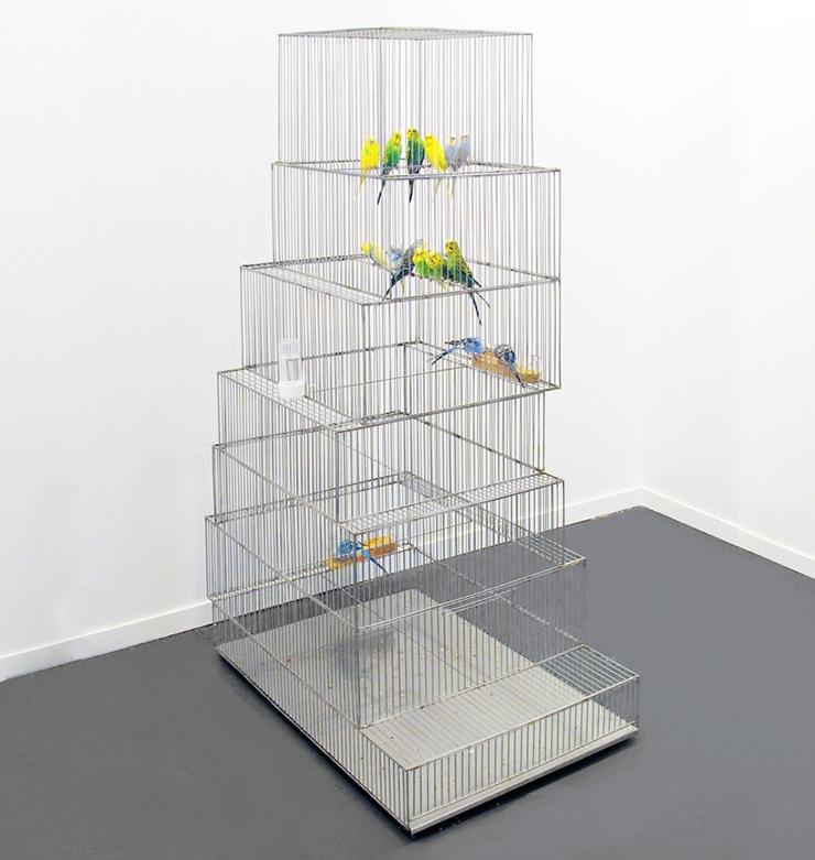 marlon de azambuja museo jaula pájaros